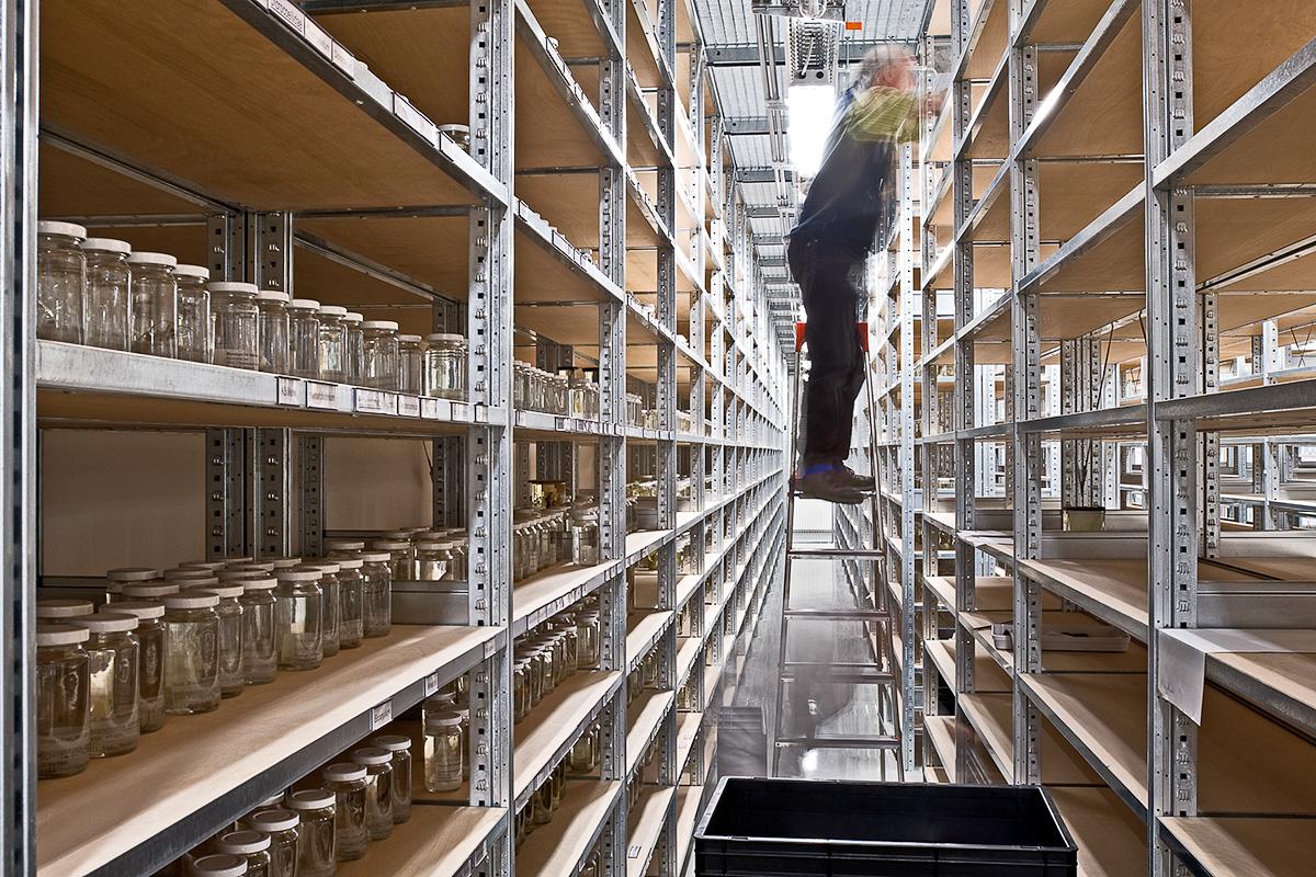 Das Foto zeigt, wie ein Mitarbeiter des Museums den neuen Sammlungsbau mit Alkohol-Gläsern bestückt.