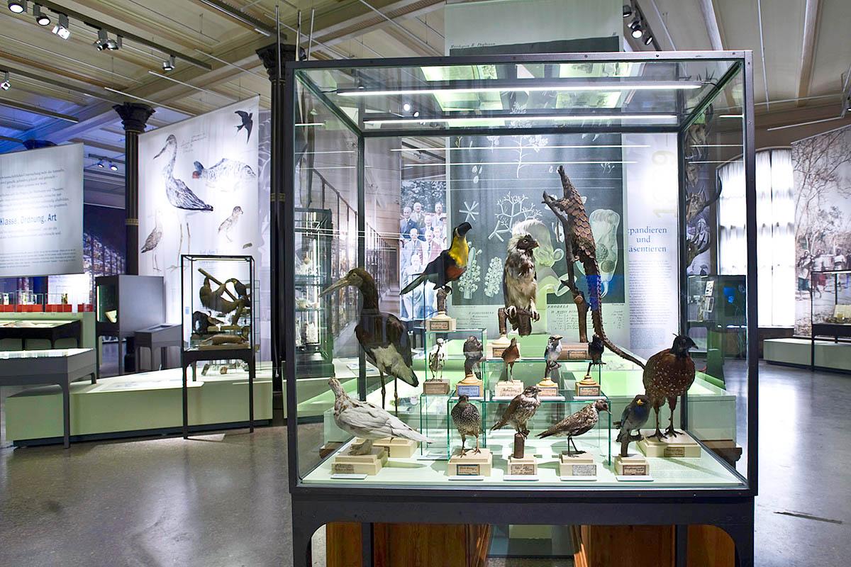 Das Foto gibt einen Einblick in die Ausstellung, im Vordergrund steht eine Vitrine mit präparierten Vögeln.