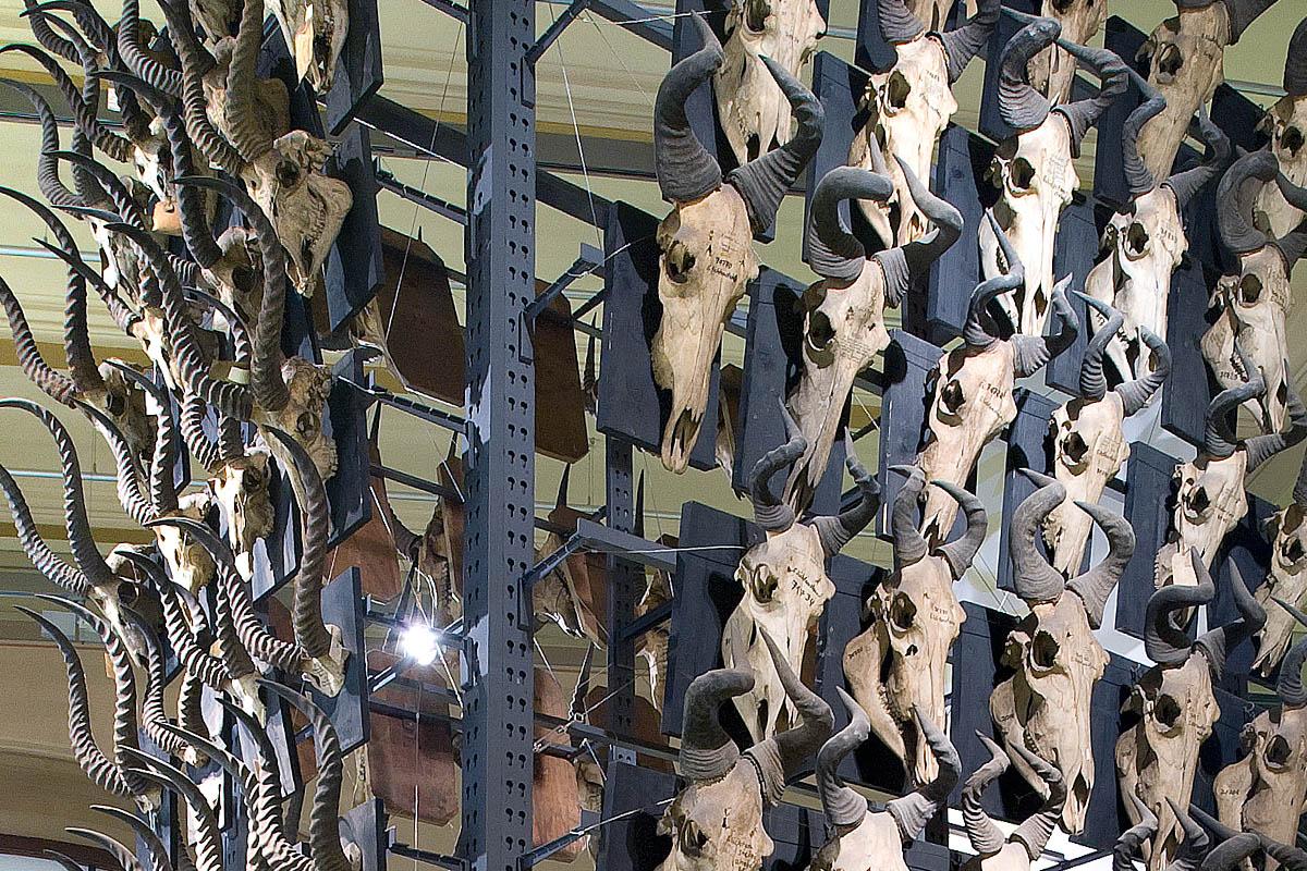 Das Foto zeigt eine Installation bestehend aus Geweihen.