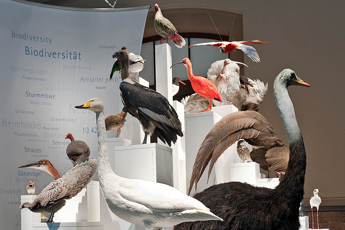 Das Foto zeigt Vogelpräparate von Robert Stein und Jürgen Fiebig, die mehrfach bei der Weltmeisterschaft der Präparation 2011 ausgezeichnet wurden.
