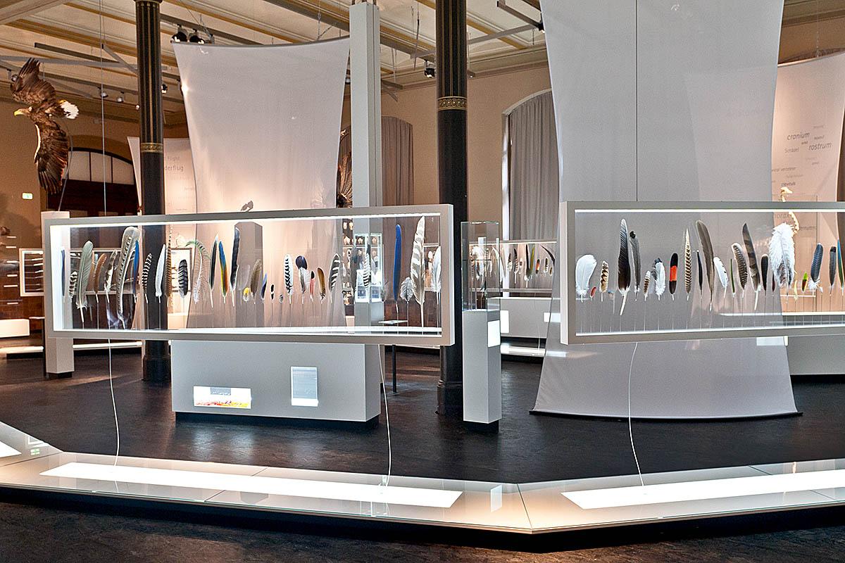 Das Foto gibt einen Einblick in die Ausstellung, im Vordergrund befinden sich hängende Vitrinen mit bunten Federn.