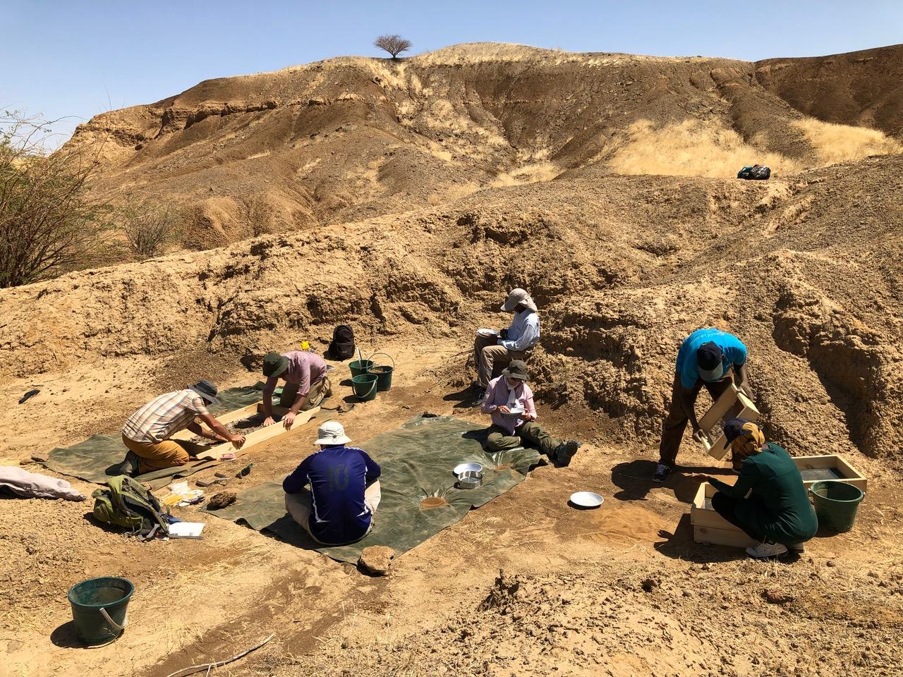 Exzellente Aufschlussverhältnisse: Fossiliensuche im Atbara-Tal. Foto: Faysal Bibi/Museum für Naturkunde
