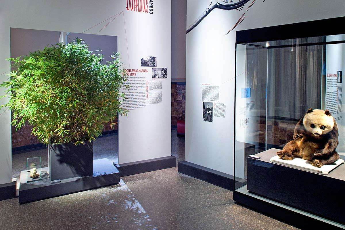 Das Foto gibt einen Einblick in die Ausstellung, auf der linken Seite befindet sich ein Bambus-Strauch, in der Vitrine auf der rechten Seite die Dermoplastik eines Pandas.