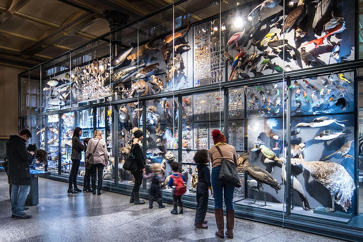 Die Biodiversitätswand zeigt rund 3000 präparierte Tierarten. Auf dem Foto betrachten Besucher die Farben- und Formenvielfalt der Arten.