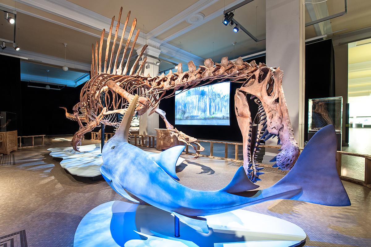 Spinosaurus - Sonderausstellung