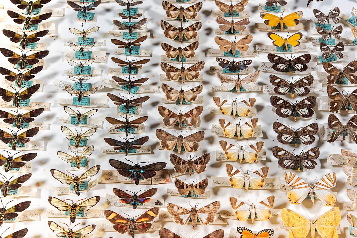Fotografie eines Insektenkastens mit Schmetterlingen in unterschiedlichen Farben.