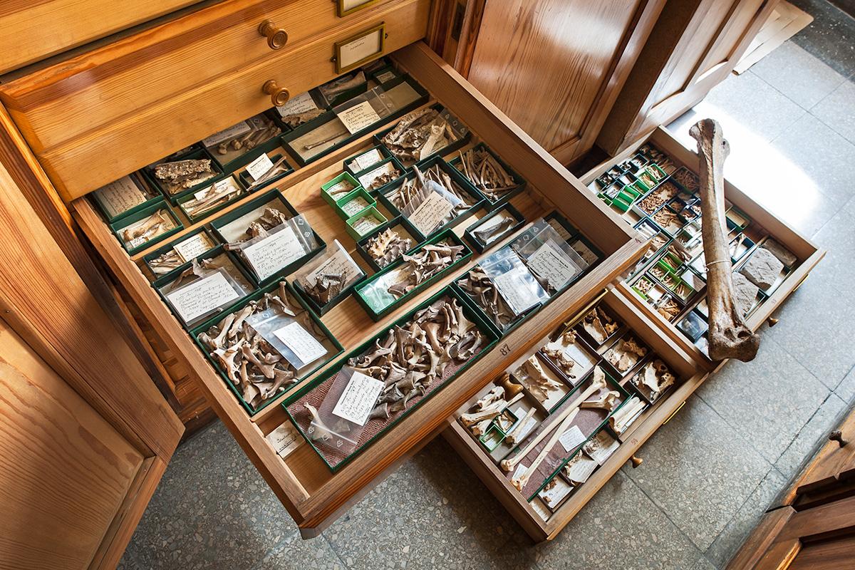 Blick in die Sammlung fossiler Vögel des Museums für Naturkunde Berlin