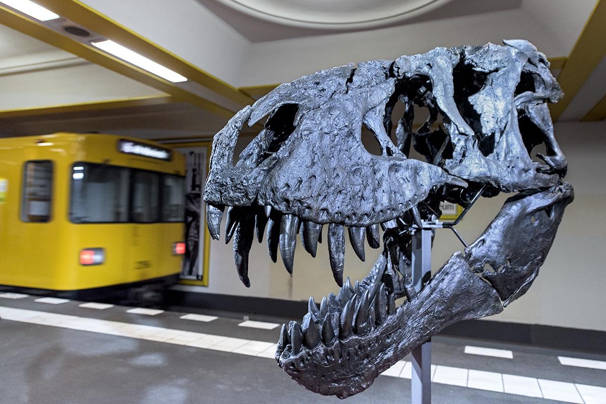 T. rex Tristan Otto im U-Bahnhof Naturkundemuseum