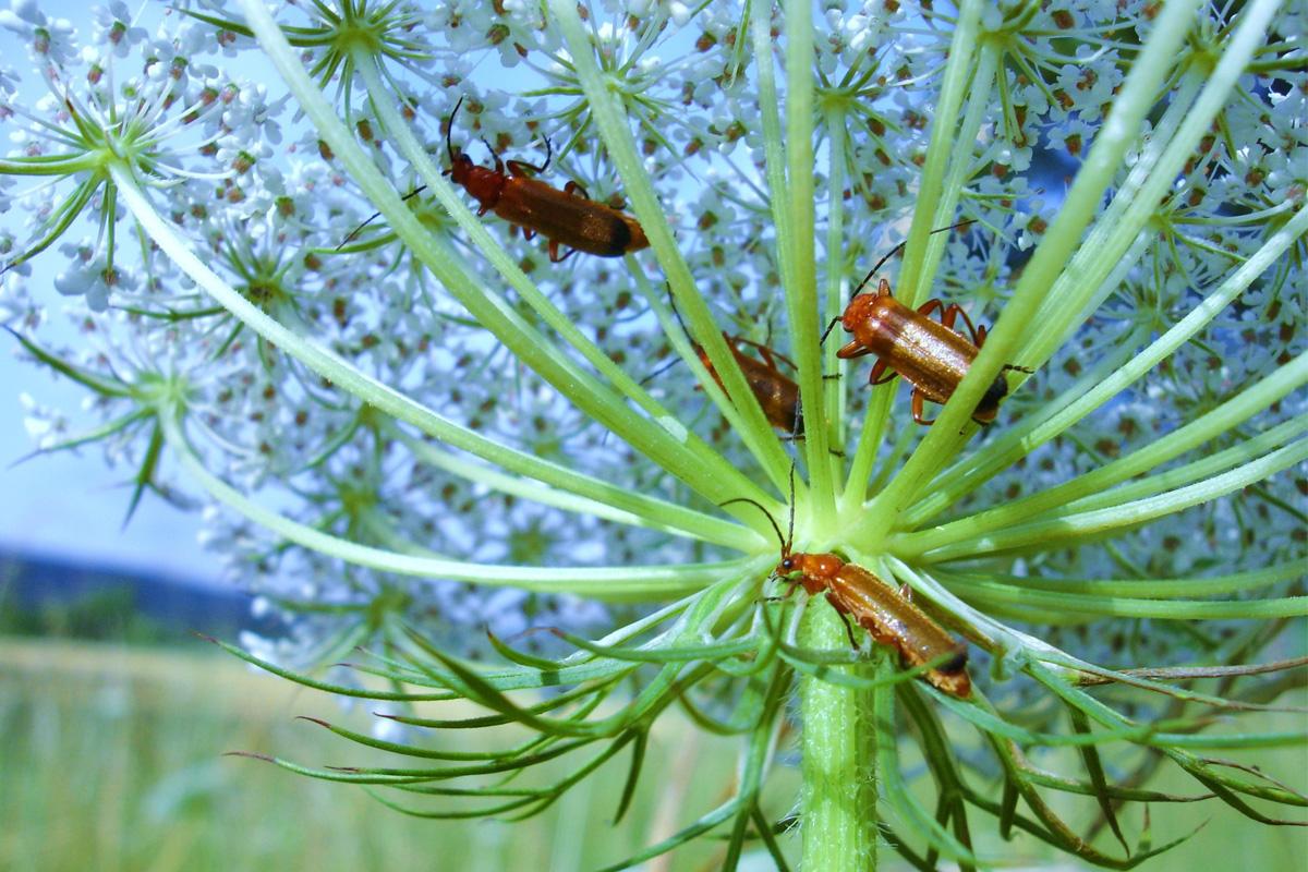 Insekten auf einer Blume
