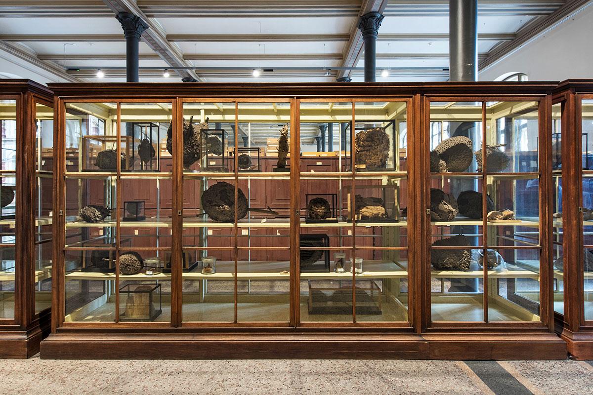 Insektennester Museum für Naturkunde Berlin