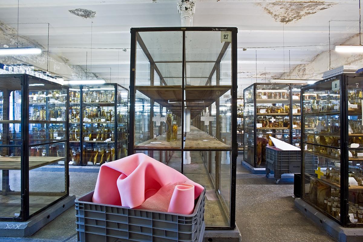 Das Foto gewährt einen Blick in den Saal Pisces, hier lagerten Fische in mit Alkohol gefüllten Gläsern vor dem Umzug der Forschungssammlungen.
