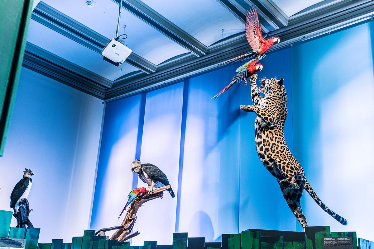Jaguar in Sonderausstellung  Ara