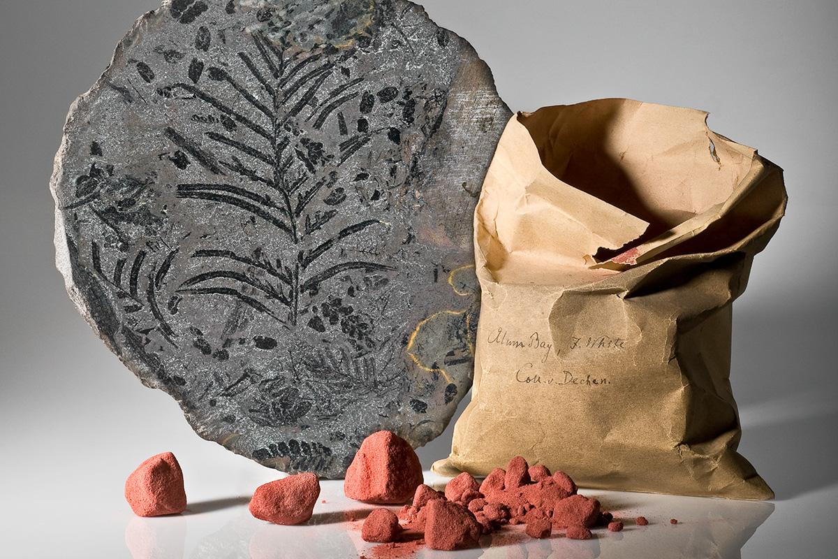 Sammlung fossile Pflanzen, Museum für Naturkunde