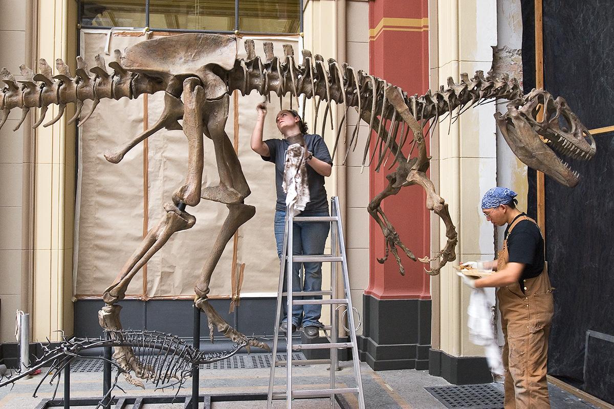 Aufbau des Allosaurus Skeletts in der Saurierwelt Ausstellung 2007
