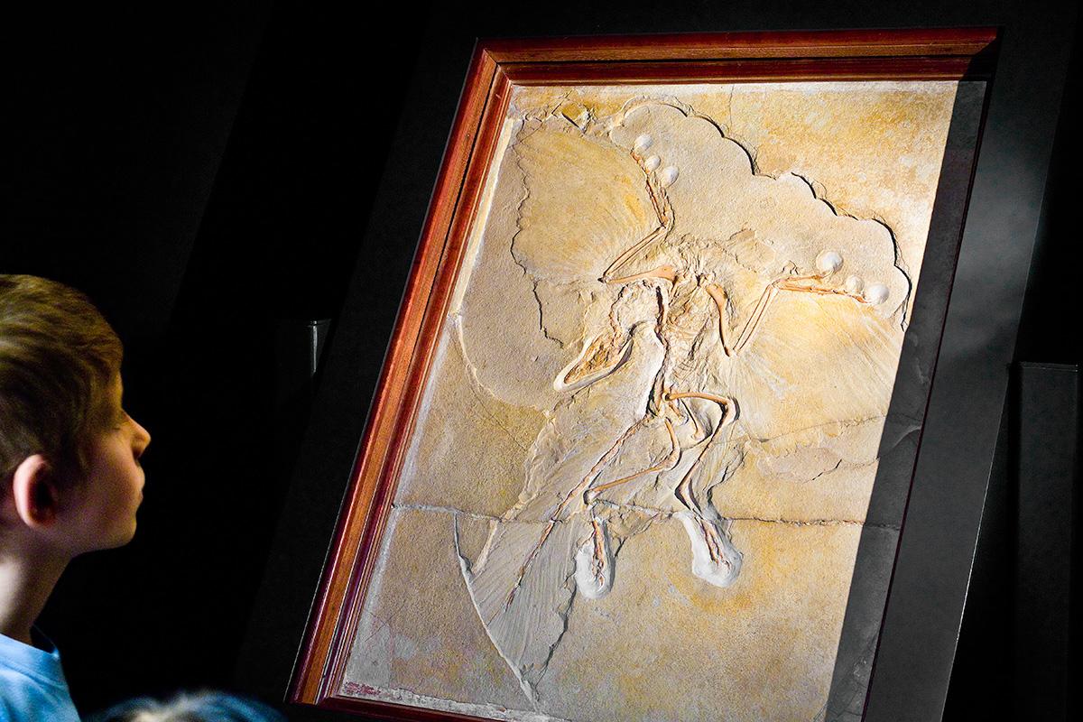 Auf dem Foto betrachten Kinder den Urvogel Archaeopteryx, dieser weist Merkmale von Reptilien und Vögeln auf.
