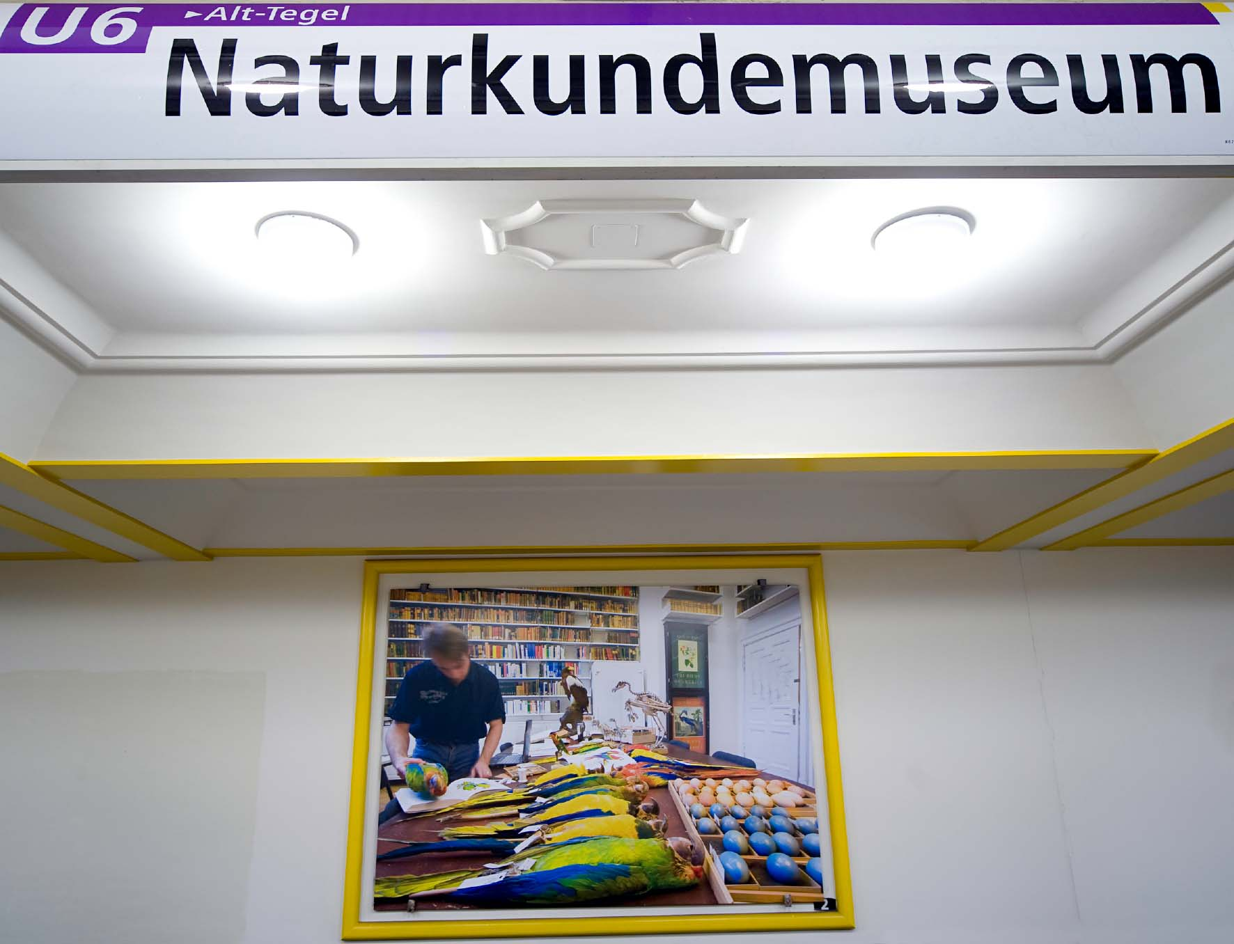 U-Bahnhof Naturkundemuseum