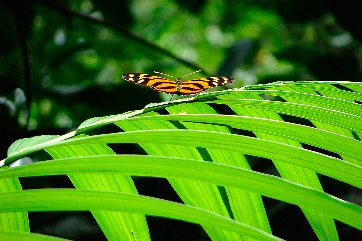 Orangener Schmetterling auf grünem Blatt
