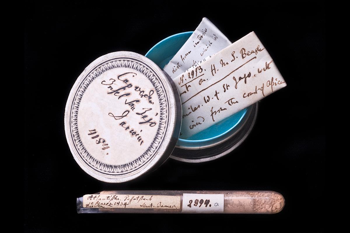 Das Foto zeigt ein Originalobjekt Darwins, eine Probe Staub.
