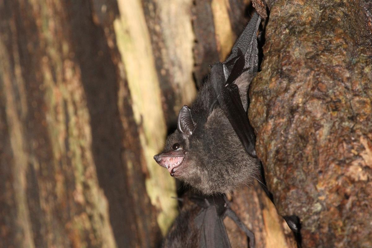 Babbelnde Jungtiere sind an der dunkleren Fellfarbe und dem geöffneten Maul zu erkennen. Die Mutter hat eine hellere Fellfarbe (Hintergrund).