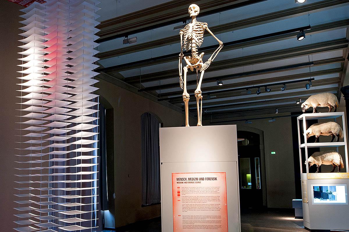 Das Foto gibt einen Einblick in die Ausstellung, in der Mitte ist auf einer Stele ein menschliches Skelett aufgestellt.