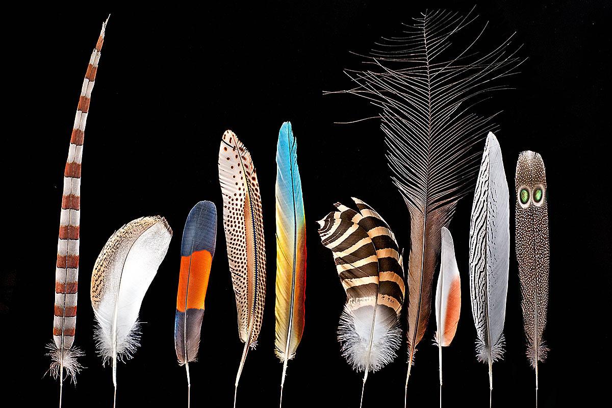 Das Foto zeigt ein Federband bestehtend aus verschiedenfarbigen Federn.