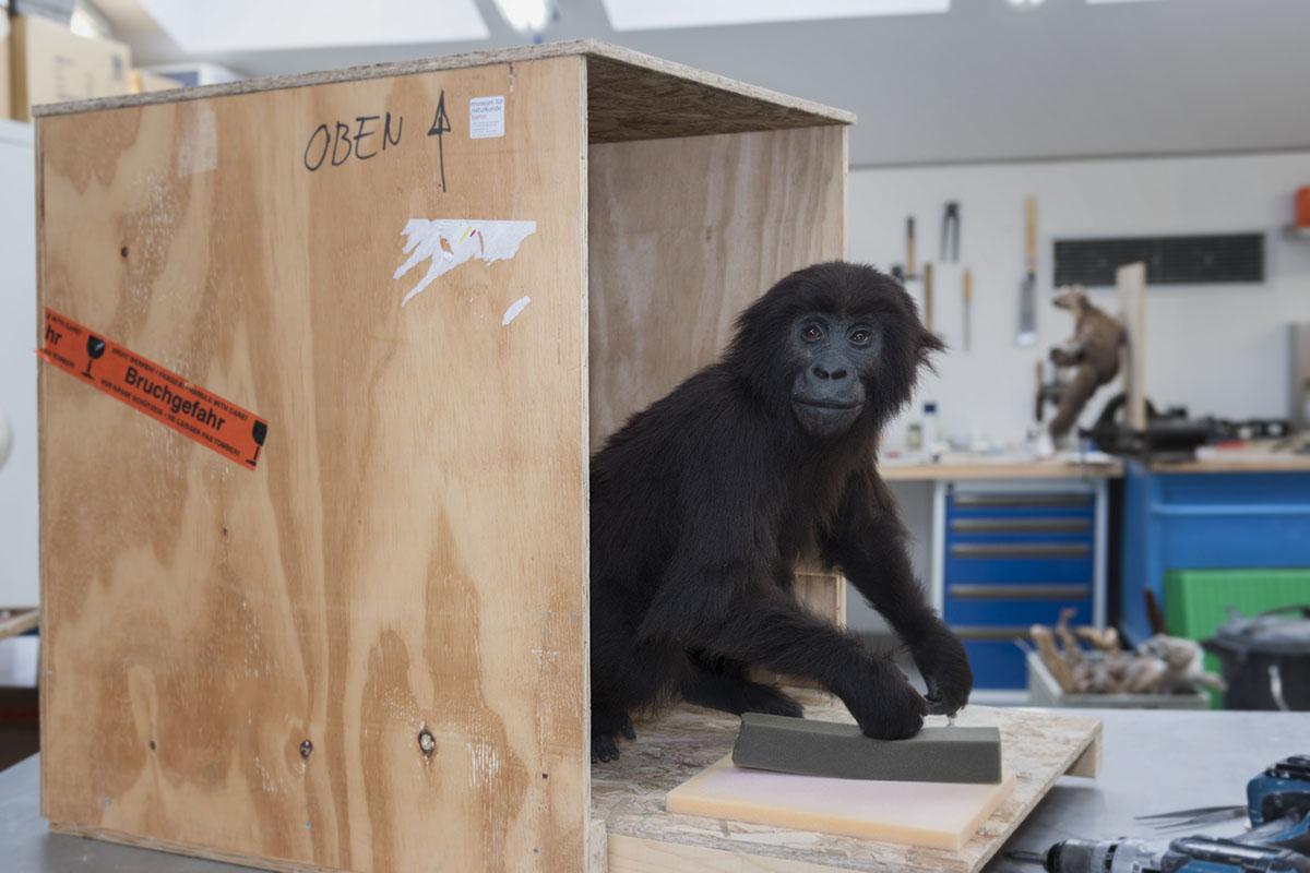 gorilla_baby_03_web_c_hwa_ja-goetz_mfn.jpg