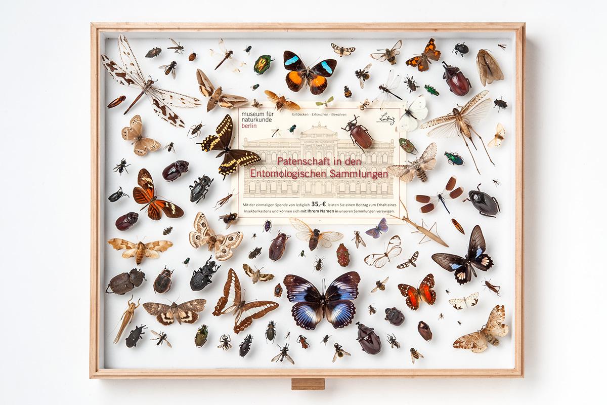 Ein Beispiel für einen Sammlungskasten für Insekten in den entomolgischen Sammlungen des Museums für Naturkunde Berlin, Foto: Carola Radke