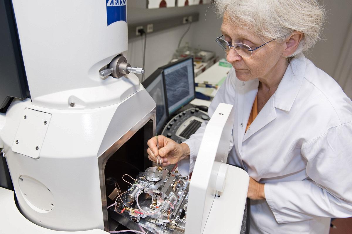 Mit dem Rasterelektronenmikroskop können feinste morphologische Oberflächen-Strukturen untersucht werden. Foto: Hwa Ja Götz/Museum für Naturkunde