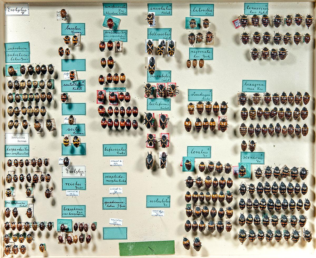 Ein Beispiel für einen Sammlungskasten für Insekten in den entomolgischen Sammlungen des Museums für Naturkunde Berlin, Foto: Hwa Ja Götz