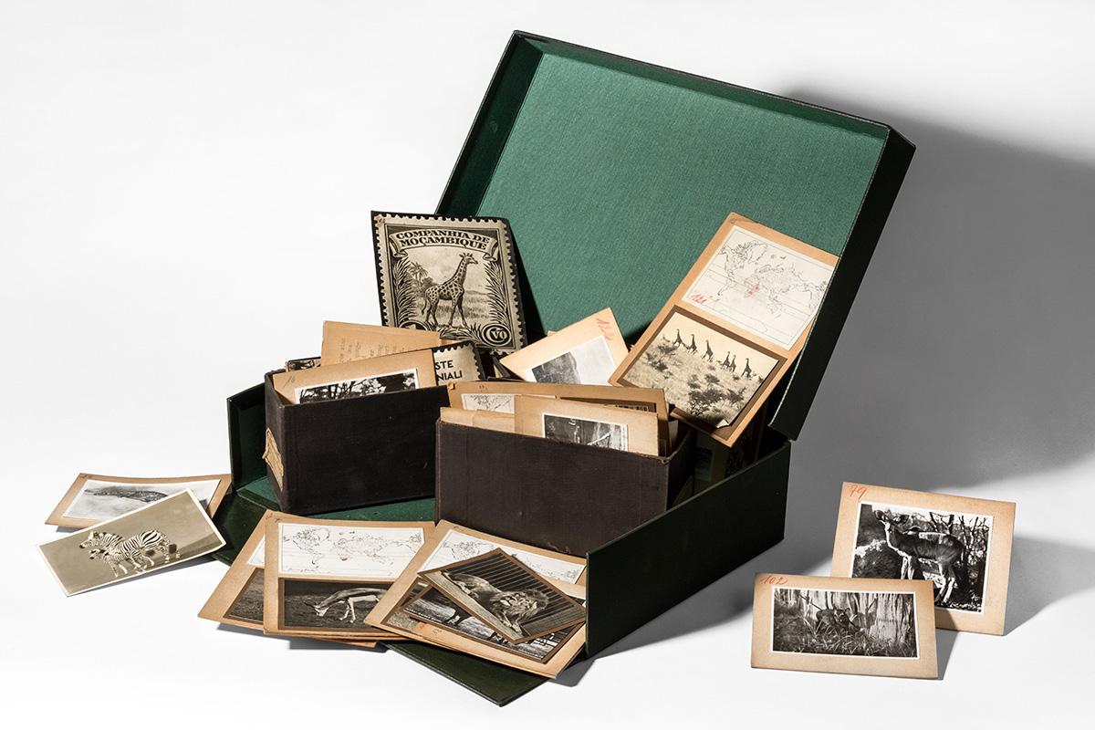 Eine geöffnete Archivbox mit historischen Fotografien
