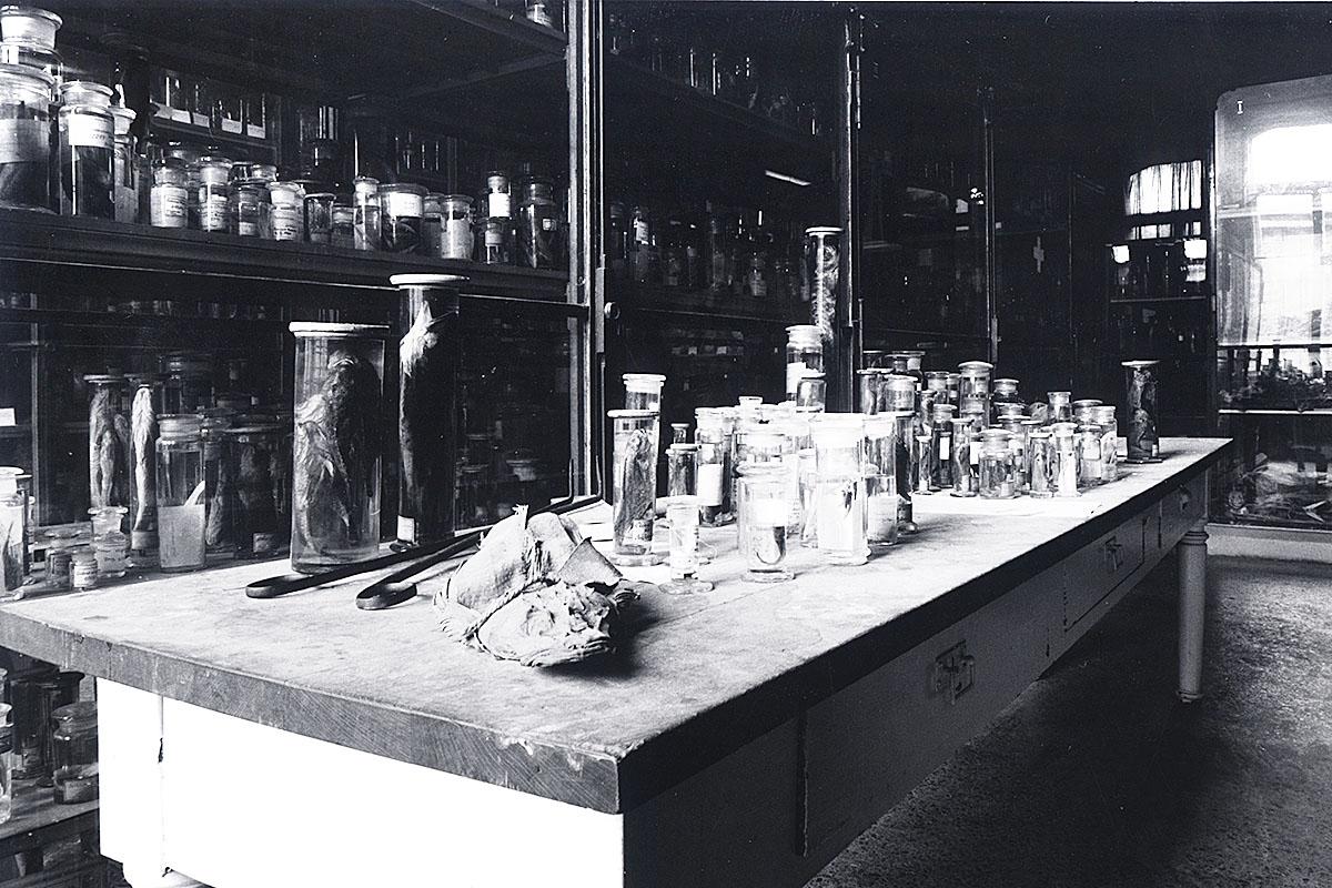 Das Foto zeigt einen Tisch mit Präparaten im Fischsaal des Museums.