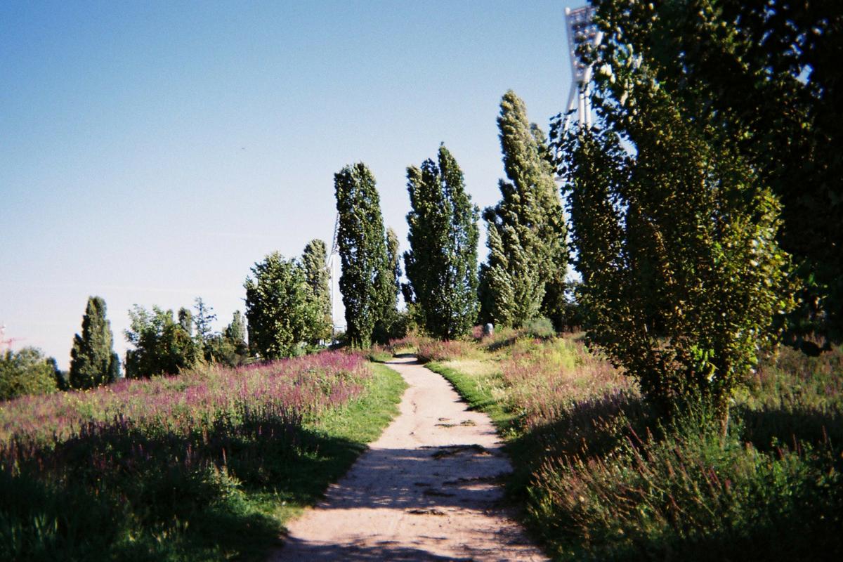 Blick eines Weges, Flutlichter im Hintergrund