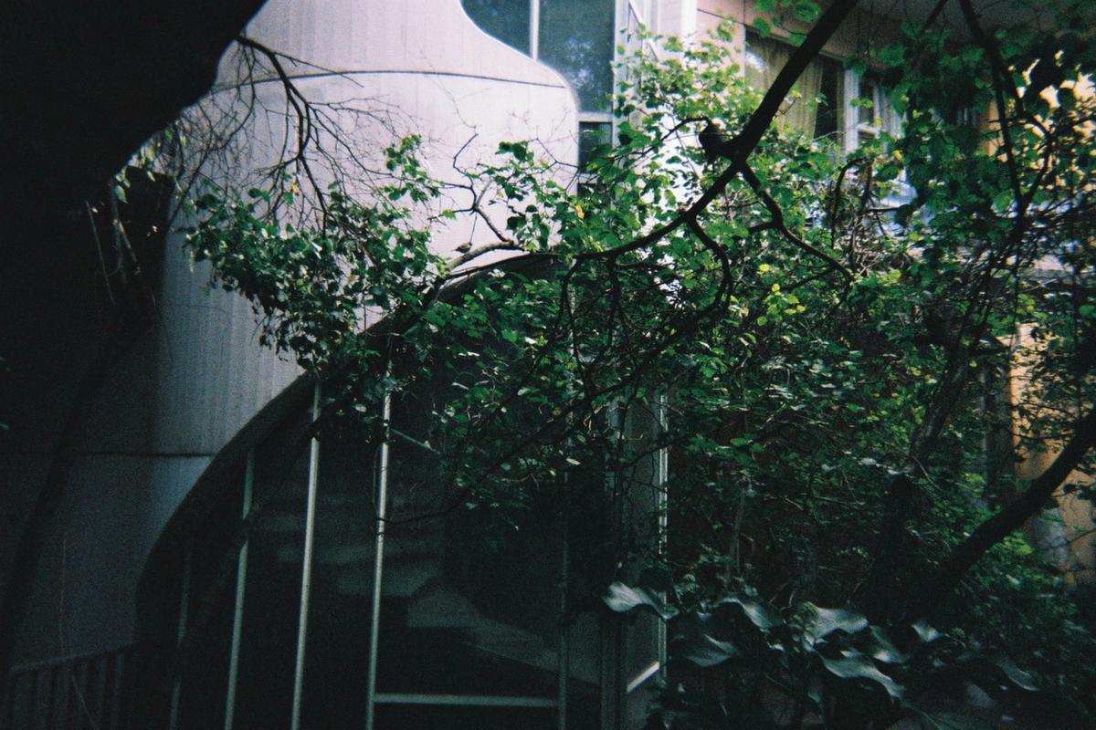 Haussperling sitzt auf Ast, im Hintergrund Metall-Fassade