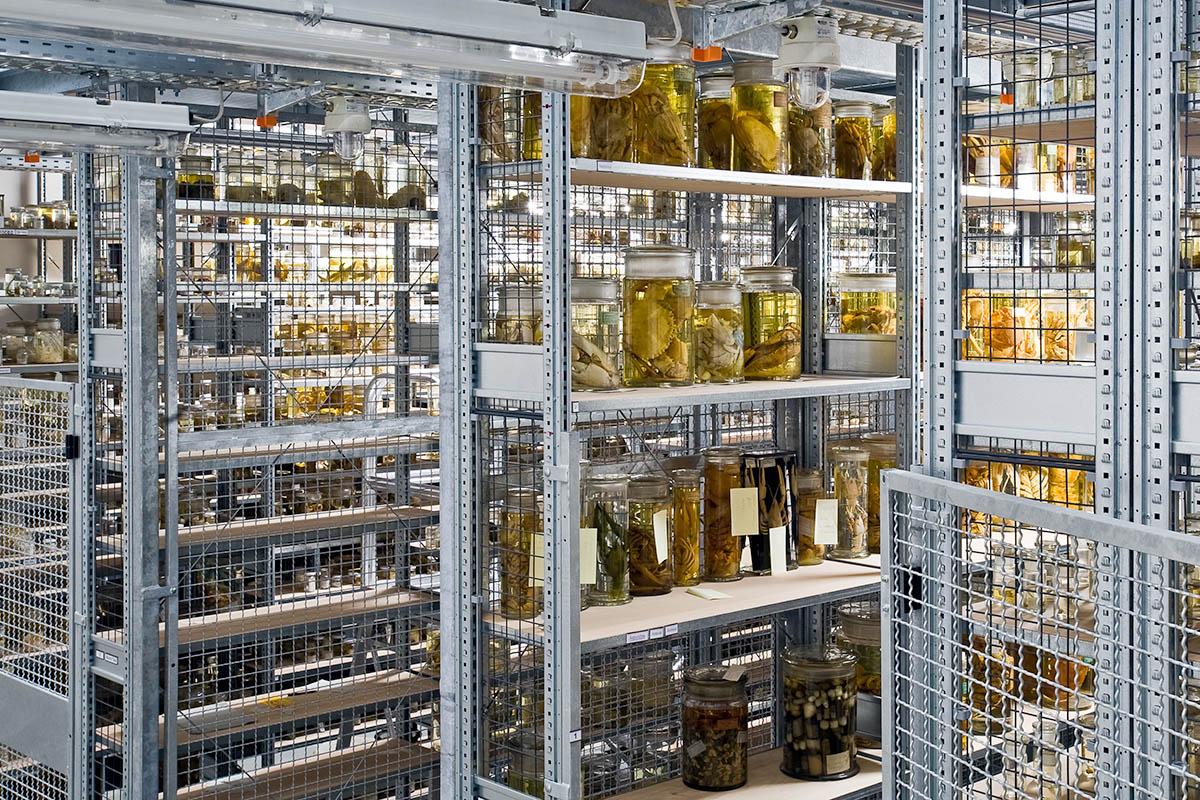 Krebssammlung im Ostflügel, der Nass-Sammlung des Museums, Foto: Carola Radke / MfN
