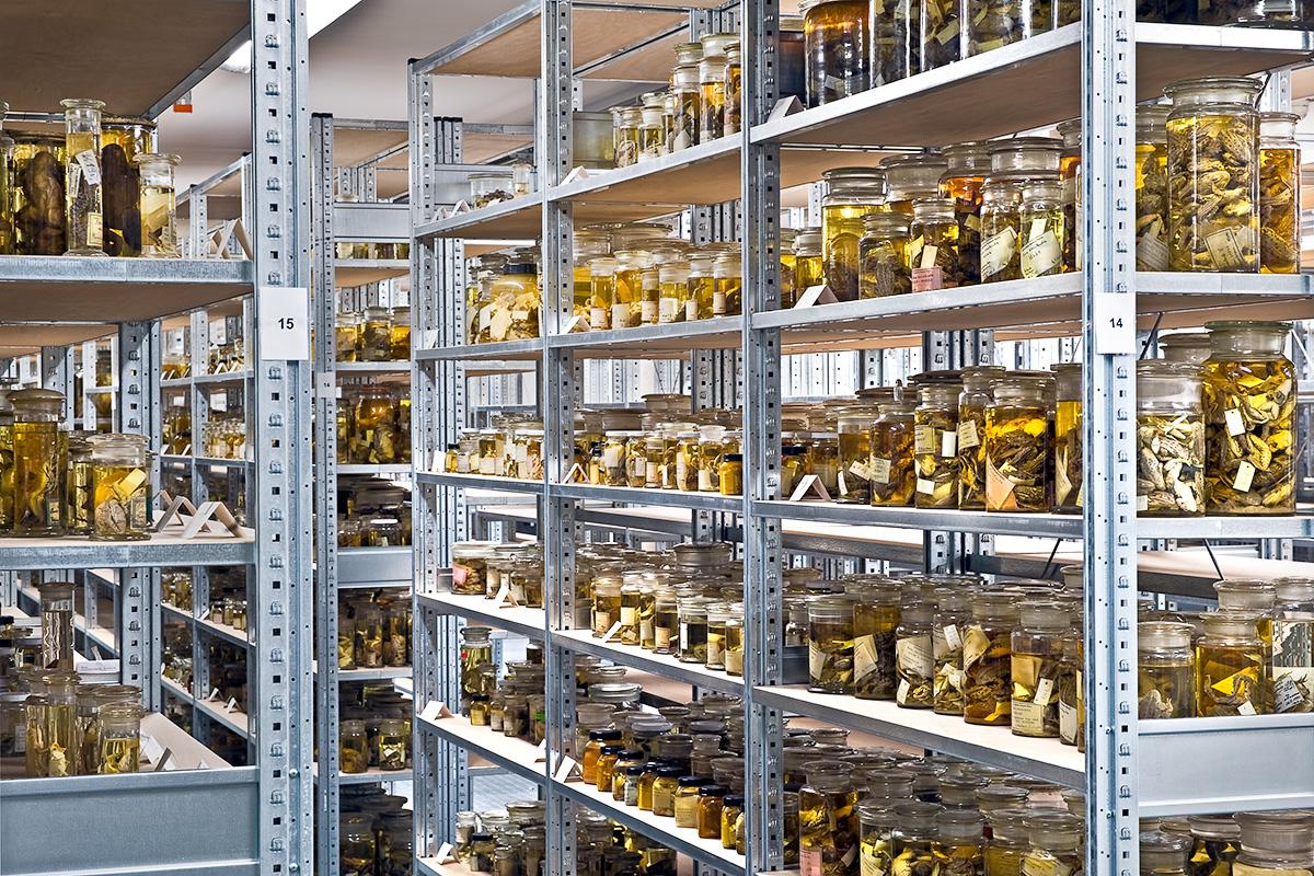 Das Foto zeigt die Forschungssammlung nach dem Umzug in das neue Sammlungsgebäude.