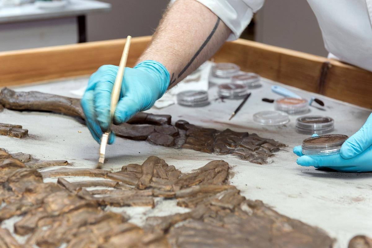 Feinarbeit an Fossilien im Paläontologischen Präparationslabor des Museums für Naturkunde Berlin. Foto: Hwa Ja Götz/Museum für Naturkunde