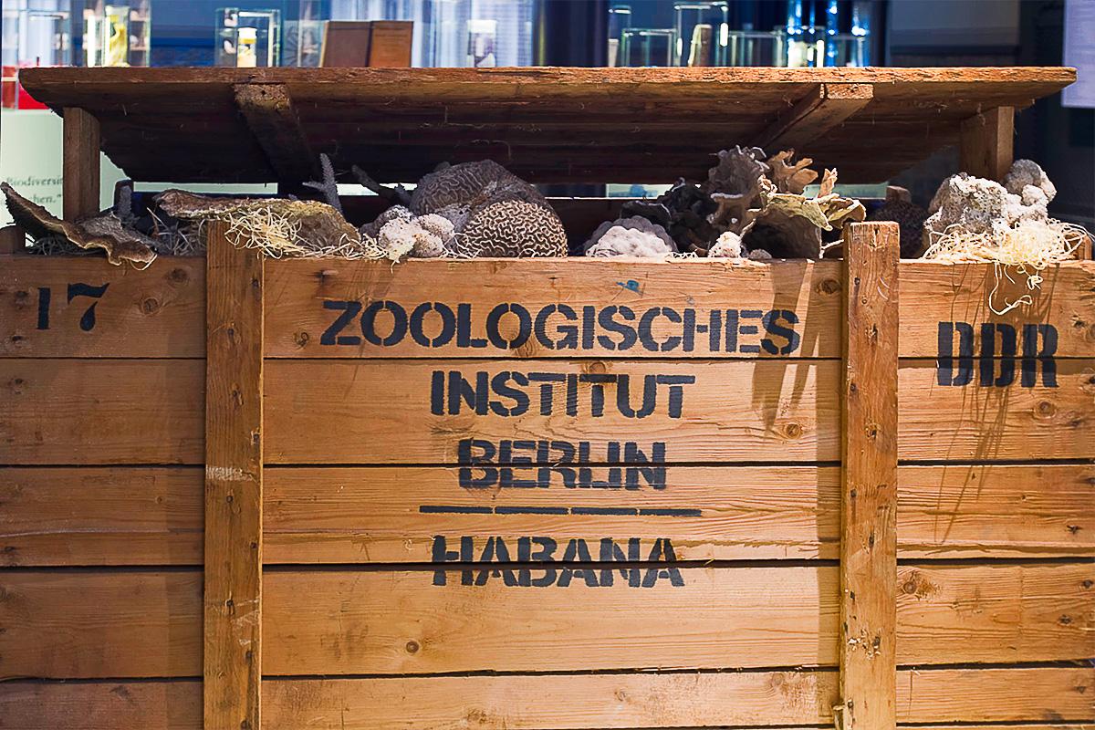 Mit Korallen gefüllte Transportkiste der DDR-Expedition nach Kuba.