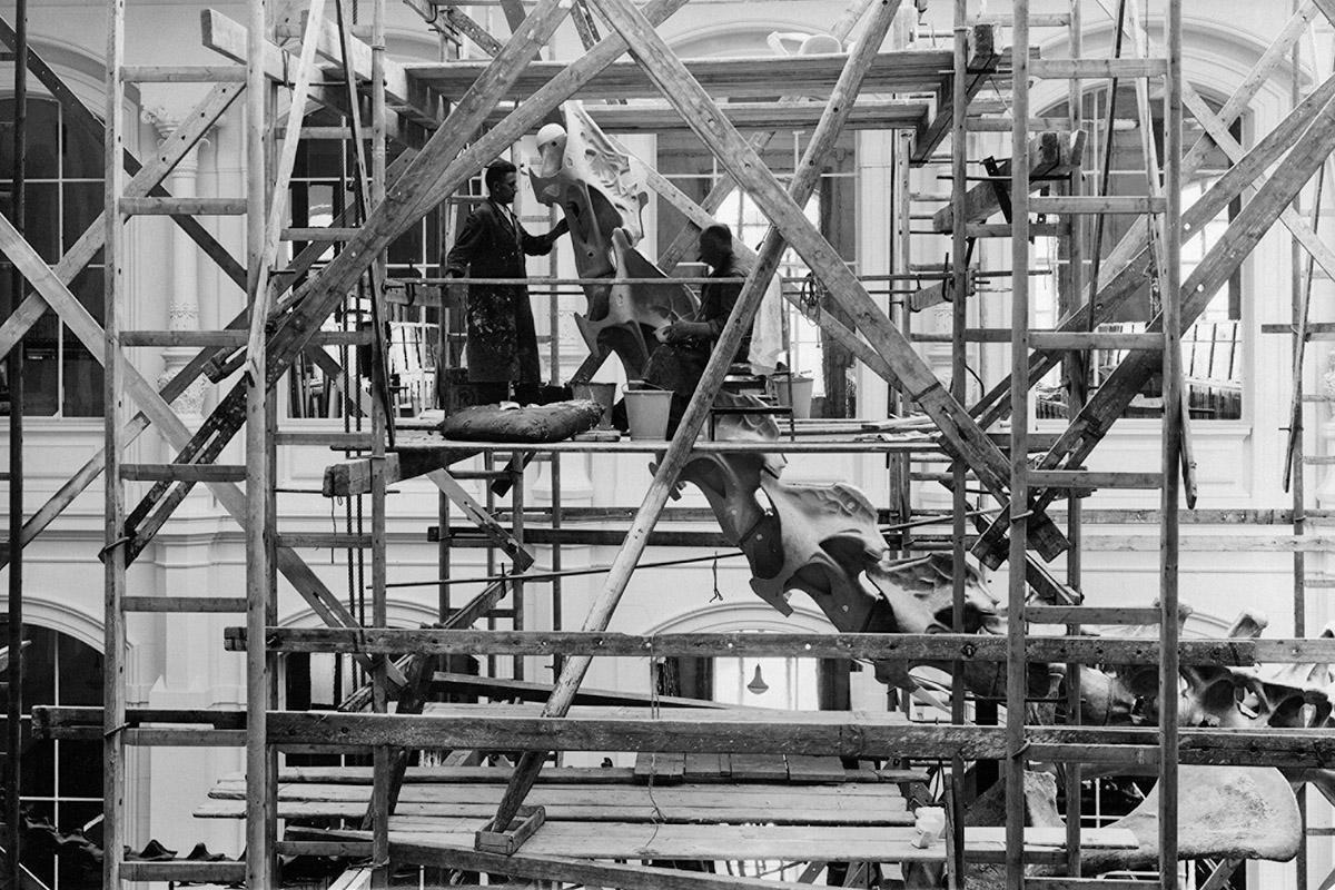Gerüst im Sauriersaal zum Aufbau des Brachiosaurus brancai in den 1930er Jahren. Quelle: Historische Bild- und Schriftgutsammlungen
