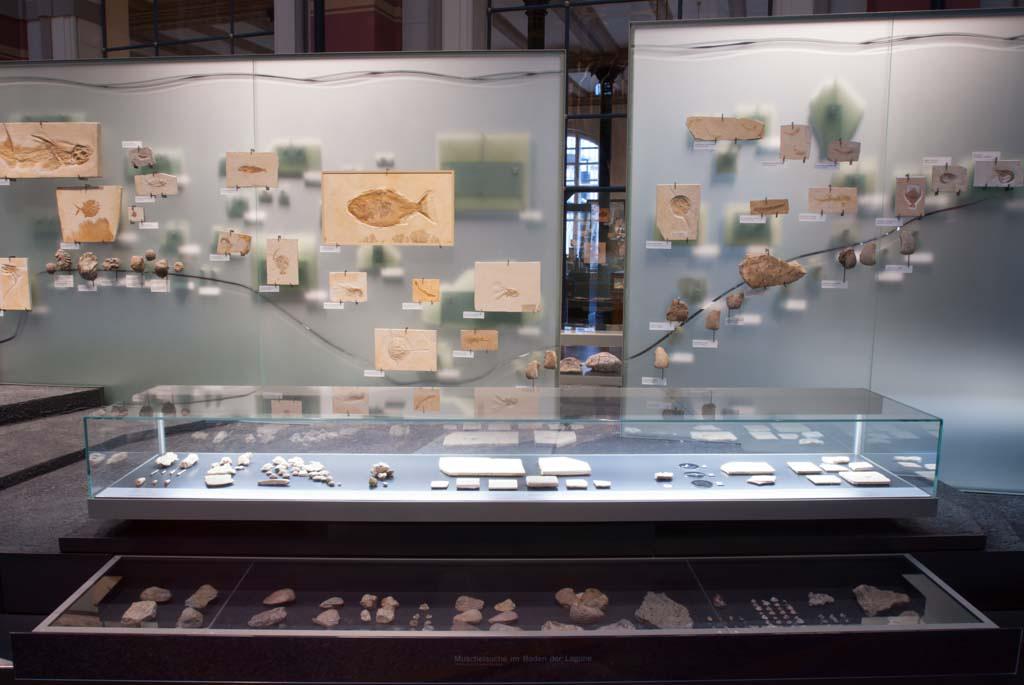 Das Foto zeigt eine Glaswand, an welcher marine Fossilien aus den Lagerstätten Tendaguru, Eichstätt, Solnhofen gezeigt werden.