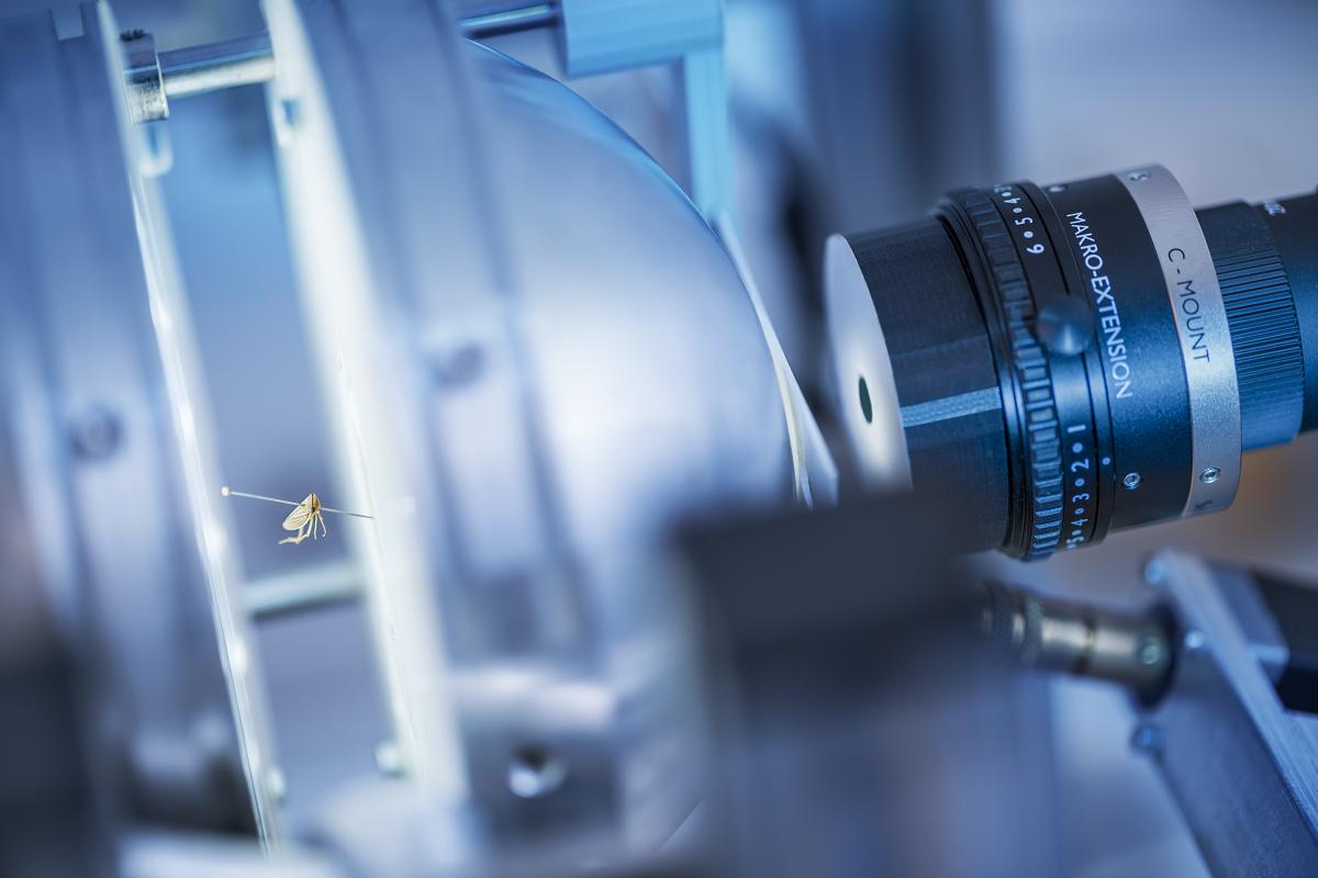 3D-Insektenscanner