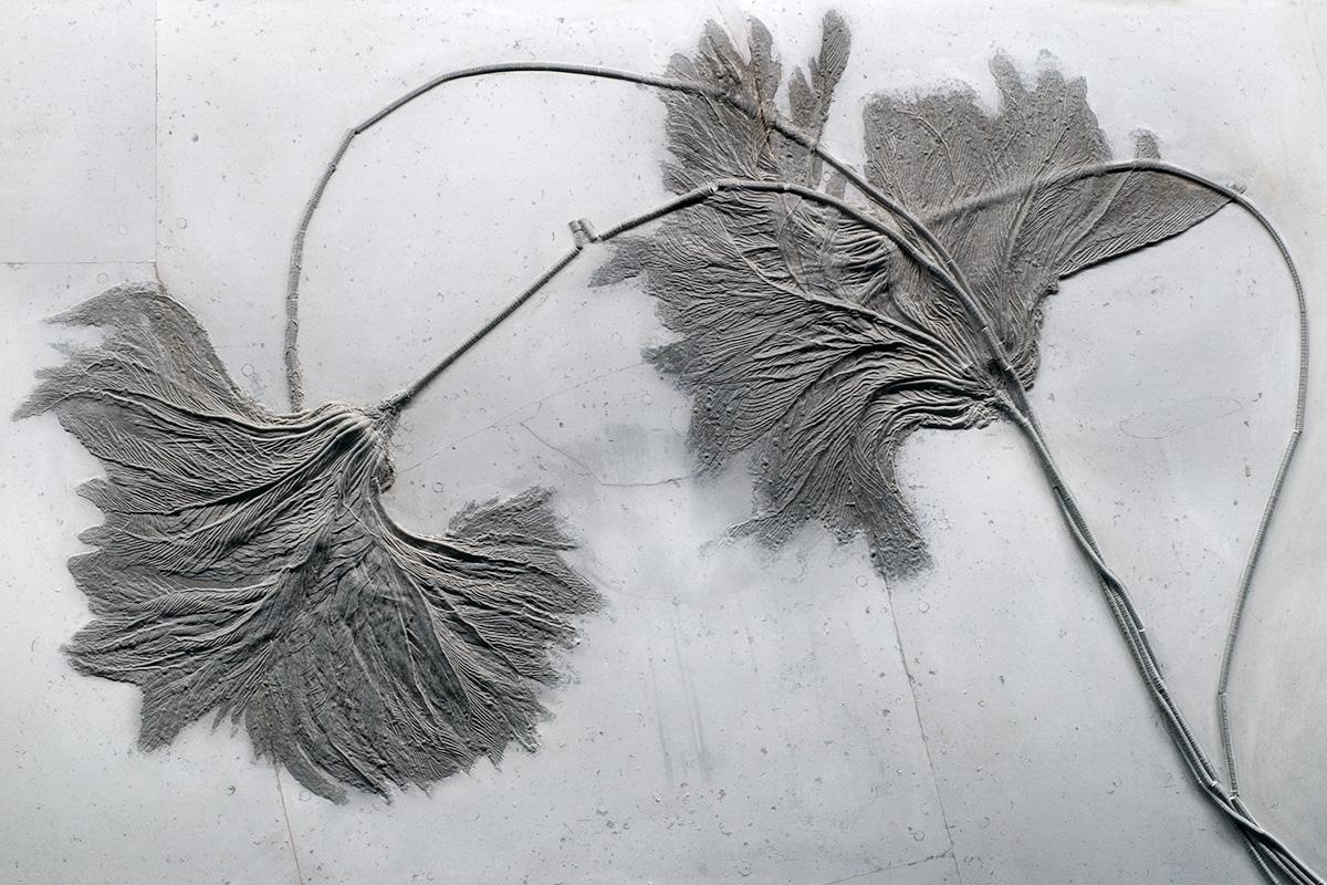 fossile Seelilien Seirocrinus subangularis, Foto: Carola Radke