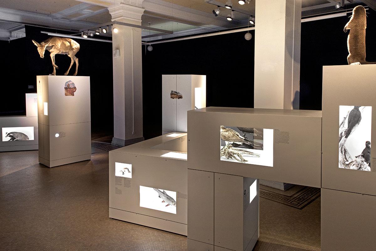 Einblick in die Sonderausstellung Sielmann! des Museums für Naturkunde