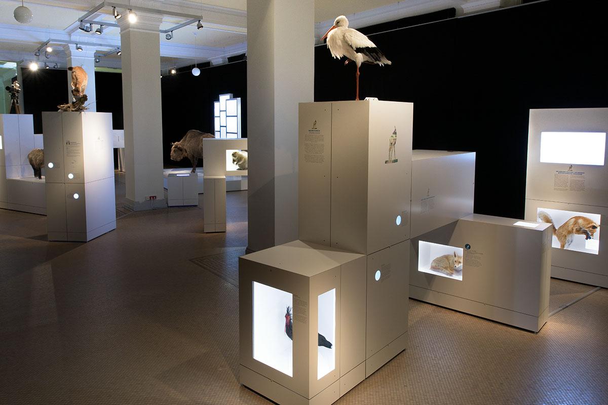 Einblick in die Sonderausstellung Sielmann! des Museums für Naturkunde Berlin
