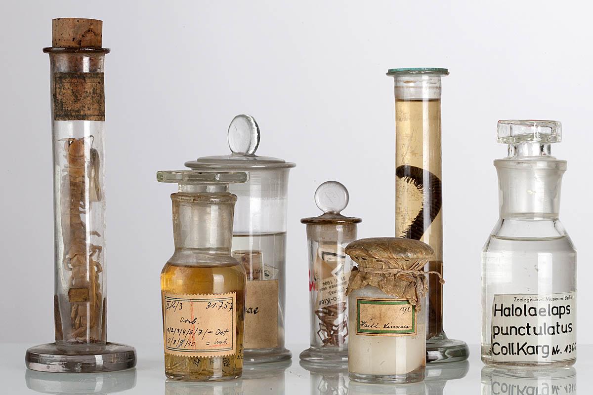 Alkoholkonservierte Gläser der Riesentausendfüßer aus der Sammlung der Spinnentiere und Tausendfüßer