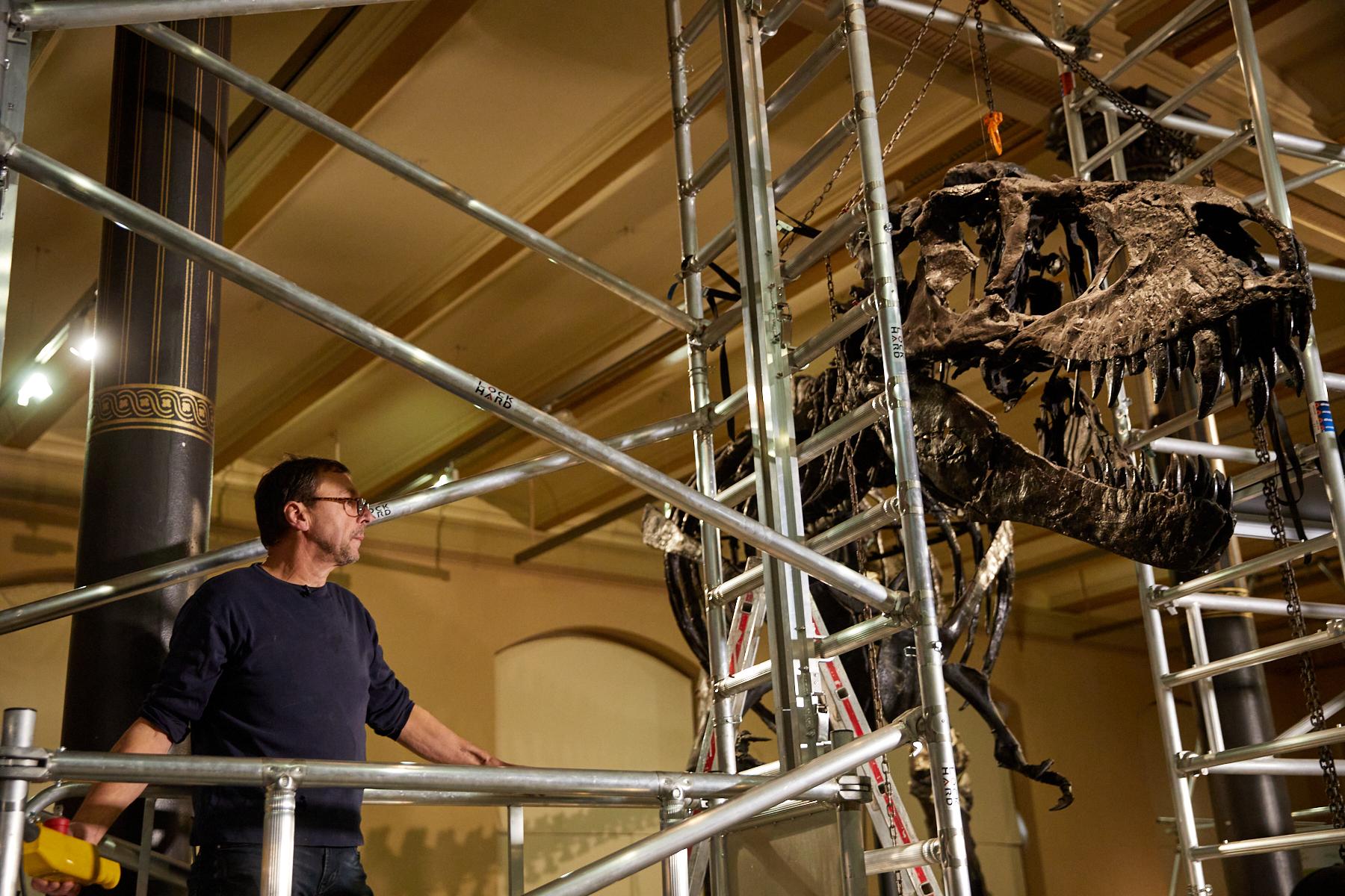 Abbau T. rex Tristan Otto