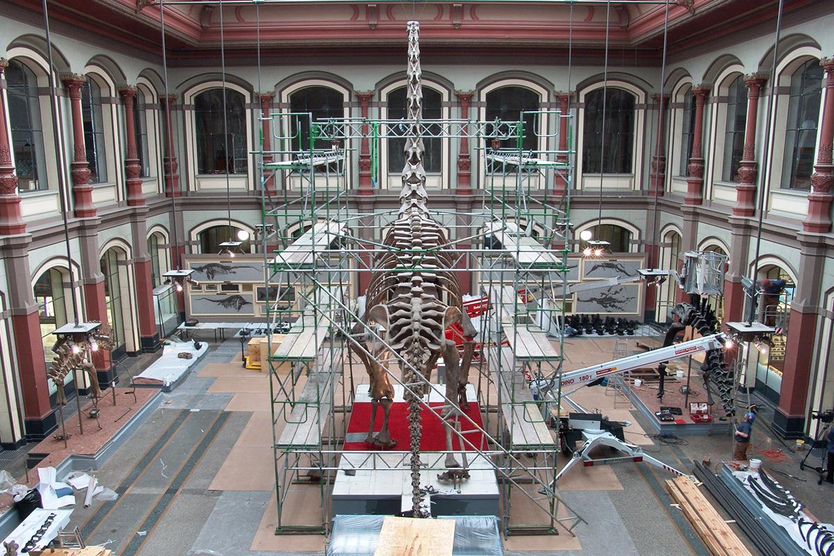 Abbau des Brachiosaurus Skeletts in Vorbereitung auf die Sanierung des Saals, Brachiosaurus mit Gerüst