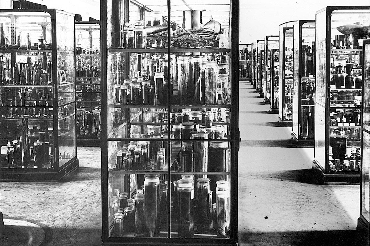 Das Foto gewährt einen Blick in den ehemaligen Fischsaal im 1. Stock.