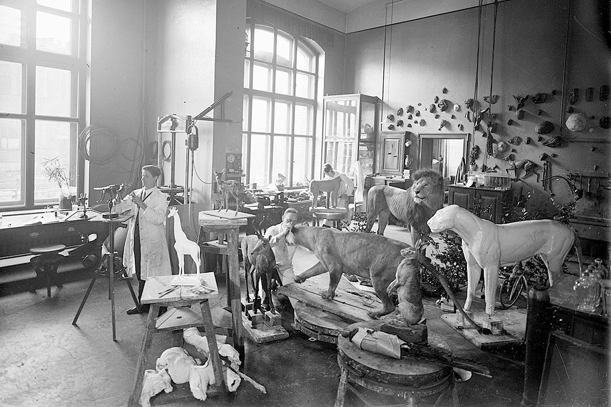 Das Foto zeigt die Präparationswerkstatt um 1935, v.l. befinden sich: Alfred Keller, Gerhard Schröder, Karl August Fähndrich und im HG: Karl Kaestner.