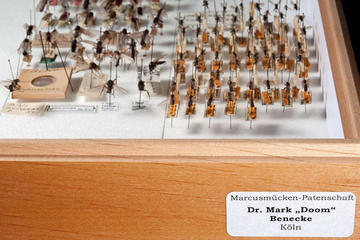 """Etikett """"Dr. Mark Doom Benecke"""" am Sammlungskasten der Markusmücken, Foto: Hwa Ja Götz"""